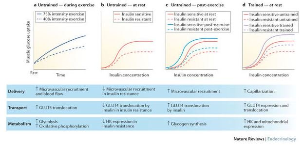 test Twitter Media - How is #exercise-stimulated #glucose uptake regulated & what are the implications for #glycaemic control? https://t.co/HngPfV9AEg #diabetes https://t.co/zRYxFdFxbQ