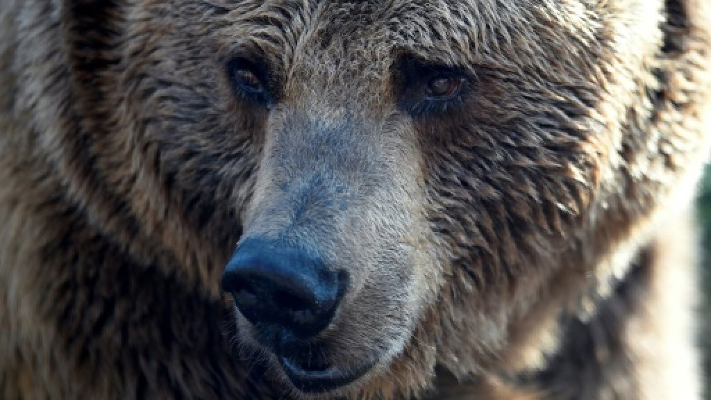 Bear shot in Italy after attacking walker