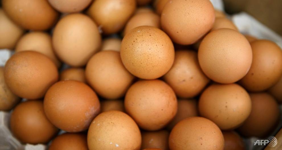 Dutch count massive cost of tainted-egg scare