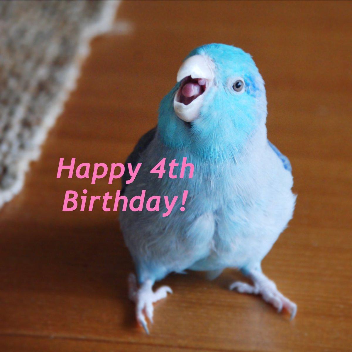 しずくちゃん🐥💕誕生日おめでとう🎂🎉4歳になりました☺️