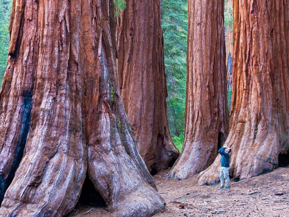 test Twitter Media - Two thousand years old. Three hundred feet high. Earth's tallest living things! What would these redwoods tell us if they could speak? https://t.co/HEib0gcqlB