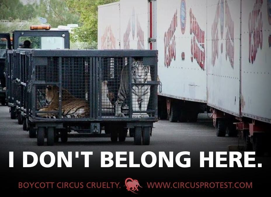 RT @CWIntl: This is a circus tiger's entire life offstage.   HELP: https://t.co/nfc7ZLcMSr https://t.co/g1W7ueqpYk