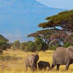 Negative publicity will hurt tourism, warns CS Balala