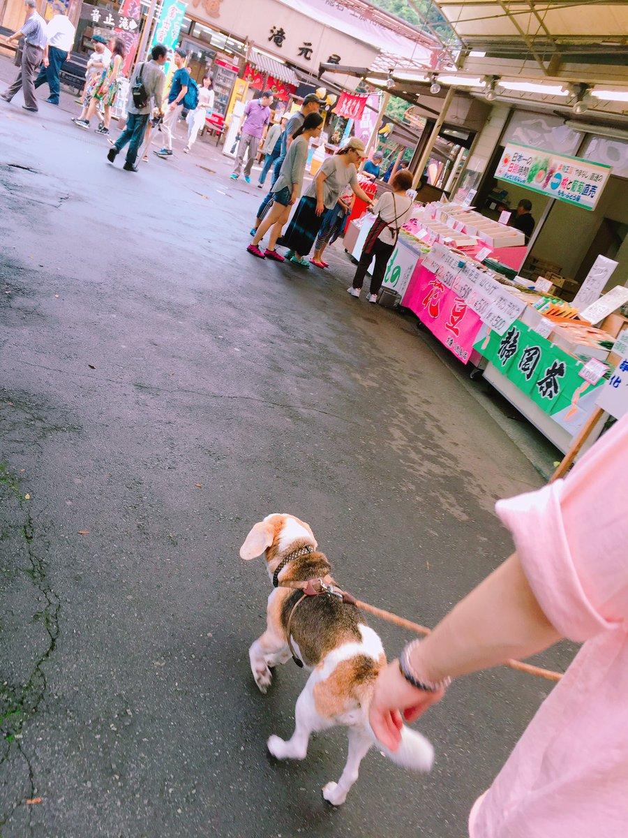 あいにくの雨だったけど満喫できた🚘❤️☔️るるも一緒だから倍楽しい💖🐶✨富士山見えなくて残念😀🗻☔️#富士#コテージ泊ま