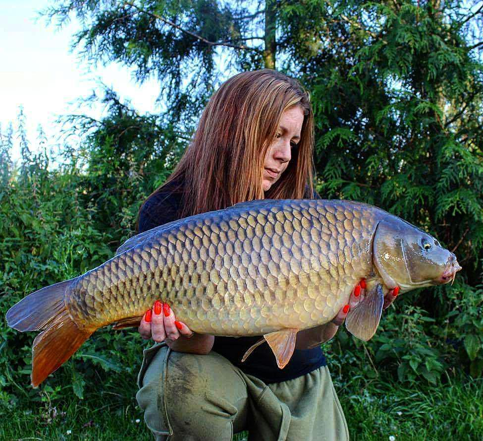 A 16lb Common for Clair today #<b>Commoncarp</b> #carpfishing #carplife #dayticket #essex https://t.