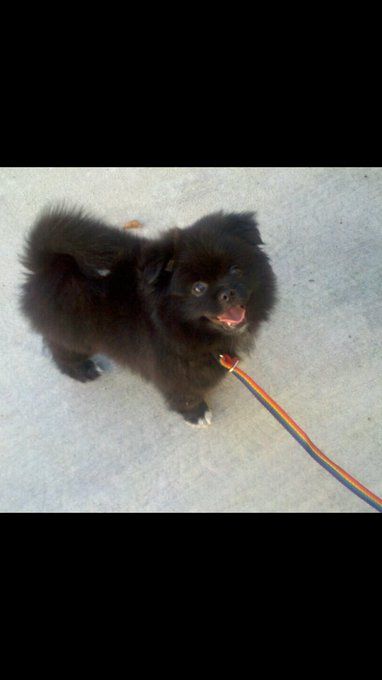 Omg you guys, 6 years ago today I adopted this little furball!🐻💕 https://t.co/DlA9mO12CP