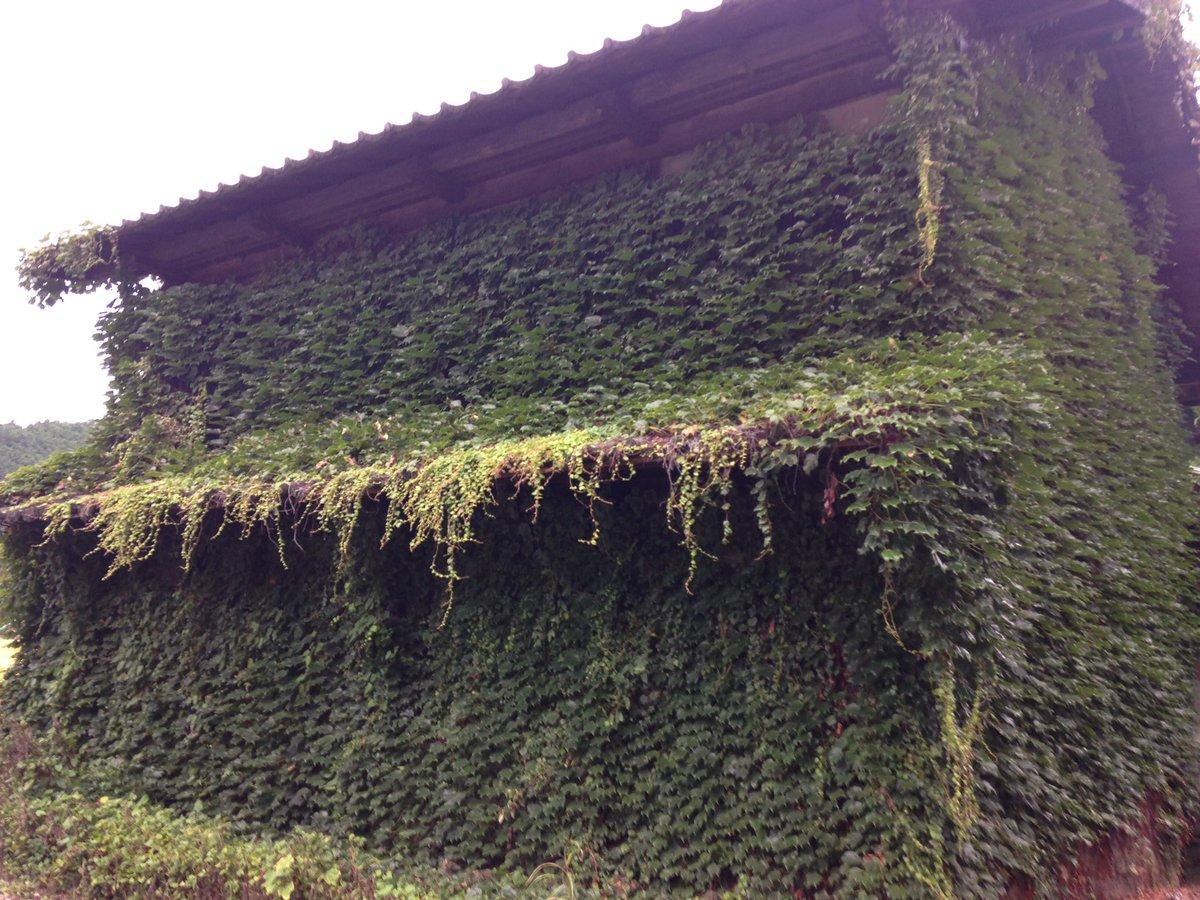 おはようございます。入口も窓も見えない迷い家(マヨイガ) のような。。植物にびっしりと覆われた家。