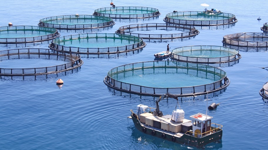 Farming fish in a tiny percentage of the oceans could feed the world