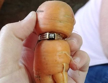 Lucky carrot: Alberta woman finds mother-in-law's lost ring on a carrot in garden