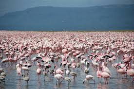 Nakuru County records tourism boom despite General Election uncertainty