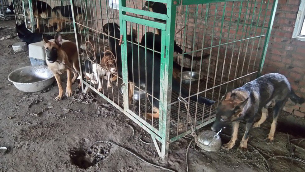 Chinese police smash dog-meat gang that stole pets and killed them for food