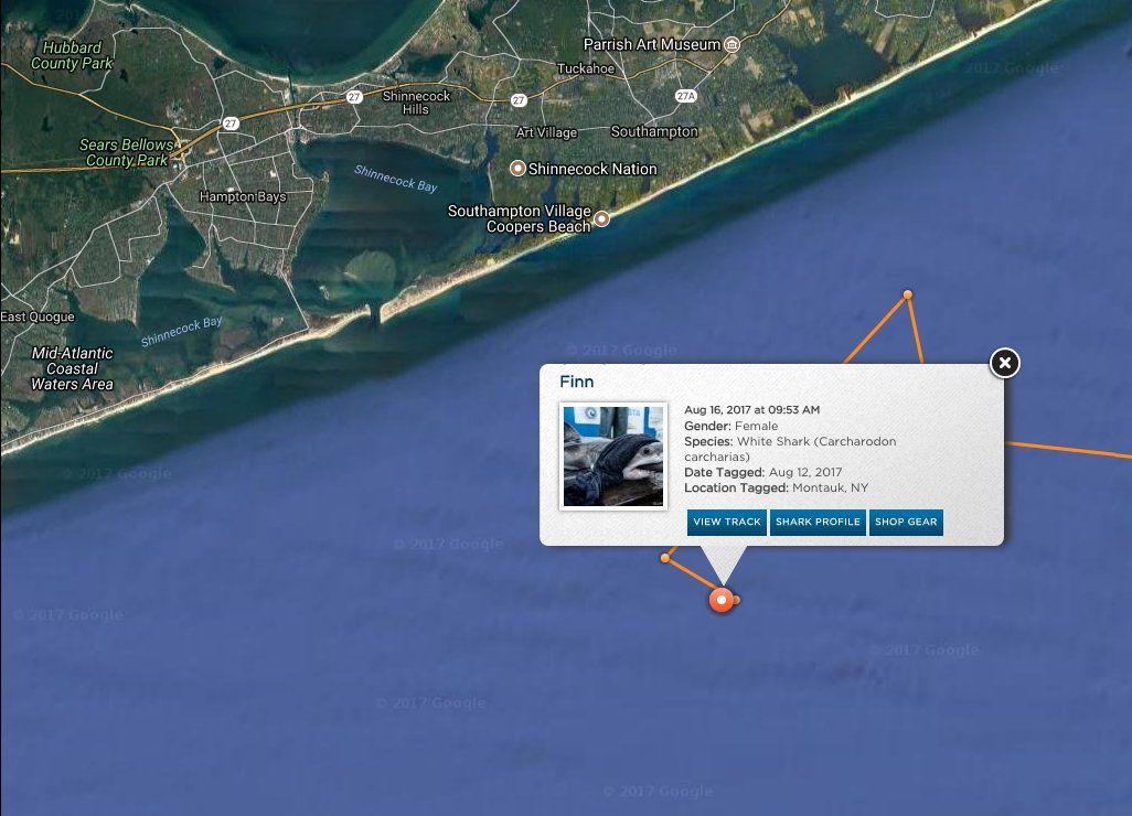 RT @OCEARCH: 4ft 79lbs white shark pup @GreatWhiteFinn pings off Southampton, #NewYork! https://t.co/GBXVNwRaxs