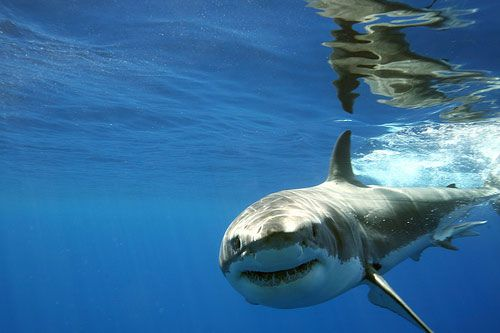 What is the best way to communicate with a fish?… Drop it a line! 🌊😜🦈 #NationalTellAJokeDay https://t.co/PSrTWLZESN