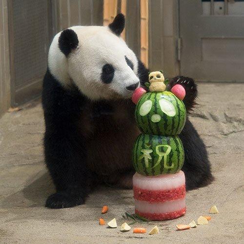 今日のパンダ(1908日目) - 今日のパンダは9:30からです。真夏の夜の動物園 いよいよ最終日。そしてリーリー12歳