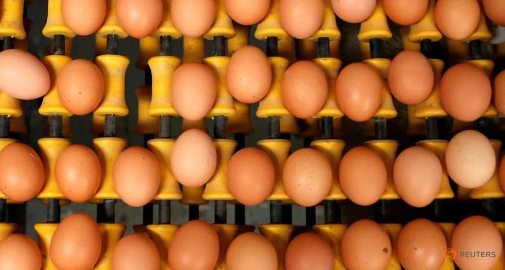 Belgium to seek damages over contaminated egg scandal