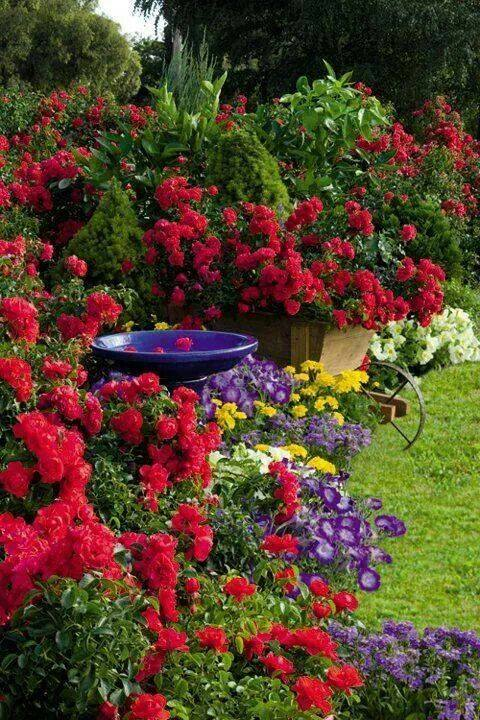"""test Twitter Media - """"If I had a flower for every time I thought of you, I could walk forever in my garden."""" ― Alfred Lord Tennyson #garden #flowers https://t.co/bfShSKxzv3"""
