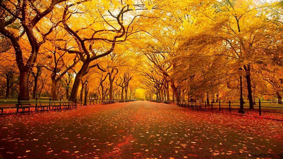 test Twitter Media - Central Park #Parks #NYC  #EllenRothAuthor https://t.co/kG0npzvTaI