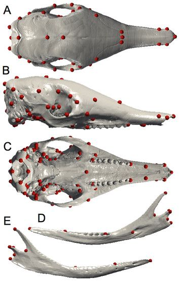 test Twitter Media - Beyond the carapace: skull shape variation and morphological systematics of long-nosed armadillos (genus Dasypus) https://t.co/Ob45bOonKO https://t.co/0AapqWYCRG