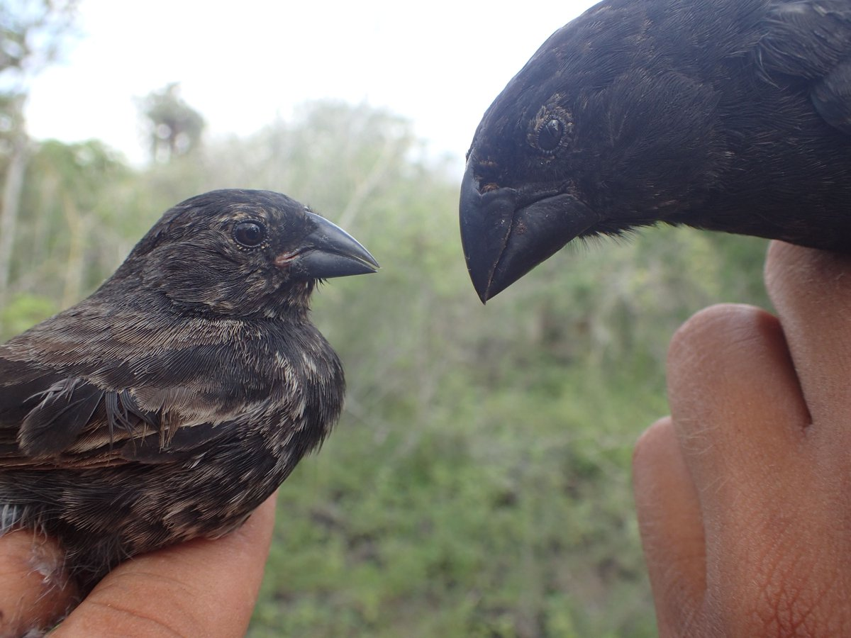 test Twitter Media - New research looks at the role of epigenetics in variations between urban and rural populations of Darwin's finches https://t.co/Xf0PZbBqvz https://t.co/WXp8zI9ihB