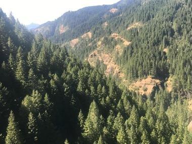 Umpqua forest wildfire spurs evacuation in Douglas County