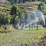 With simple irrigation, you can grow crops all year round