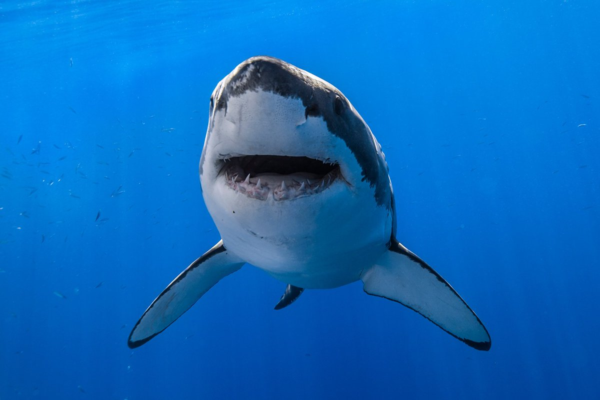 Can't we all just get along? 🌊😍🦈 #ThursdayThoughts https://t.co/xDqdJzyYYS
