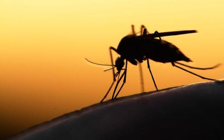 Malaria mosquito found in New Caledonia