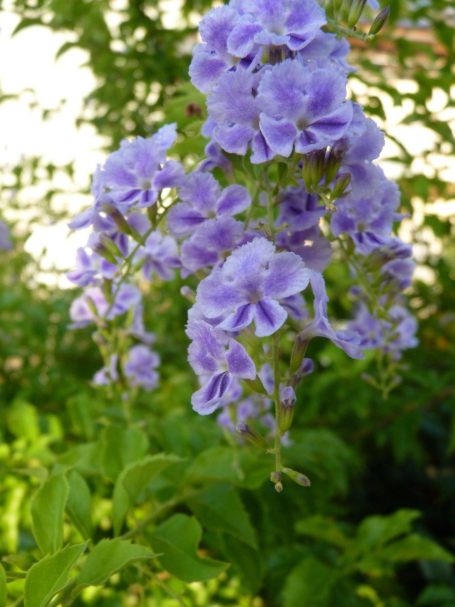 綺麗に撮れたから見てー📷さすがおまかせオートやな~笑まさか自分が公園の花愛でる様になるとは思ってなかったわ~🙃「大阪のお