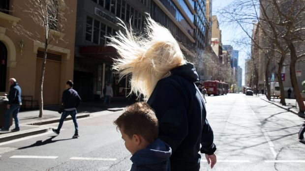 Sydney weather: 'Huge swell' and strong winds to persist through much of weekend