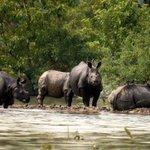 Over 140 animals found dead in flood-hit Kaziranga National Park in Assam