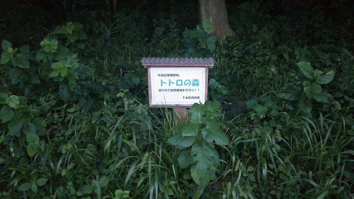 うちから10ぷんの雑木林がトトロの森だったおどろき。いつからそうなった!?
