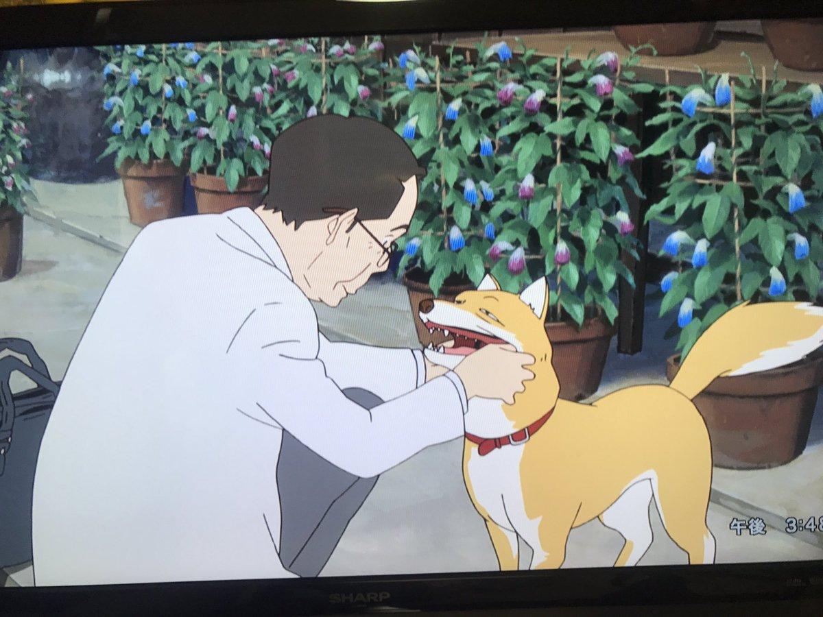 サマーウォーズにはハヤテという柴犬が出てきますが金ロではカットされてしまうシーンに非常にイッヌしてるシーンが多くあります