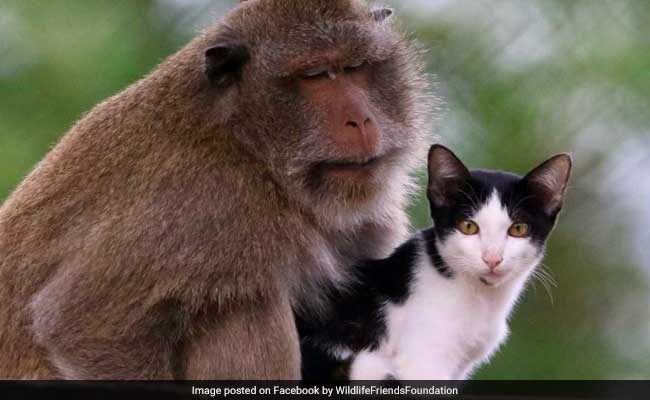 This unlikely friendship between a cat and a monkey is so aww-dorable