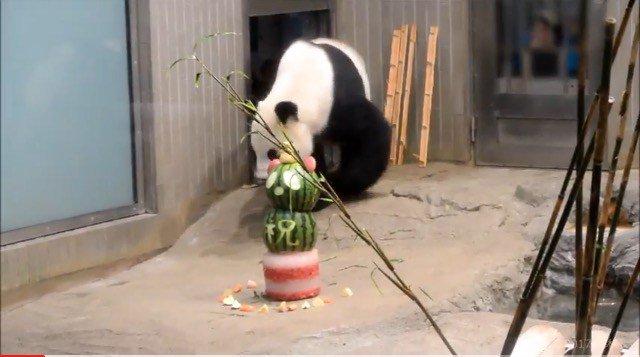 【おめでとう!】🐼リーリーパパ❤12歳のお誕生日会♪🎊【上野パンダ】