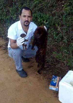 Mortes de macacos por febre amarela ligam o alerta no interior de Minas