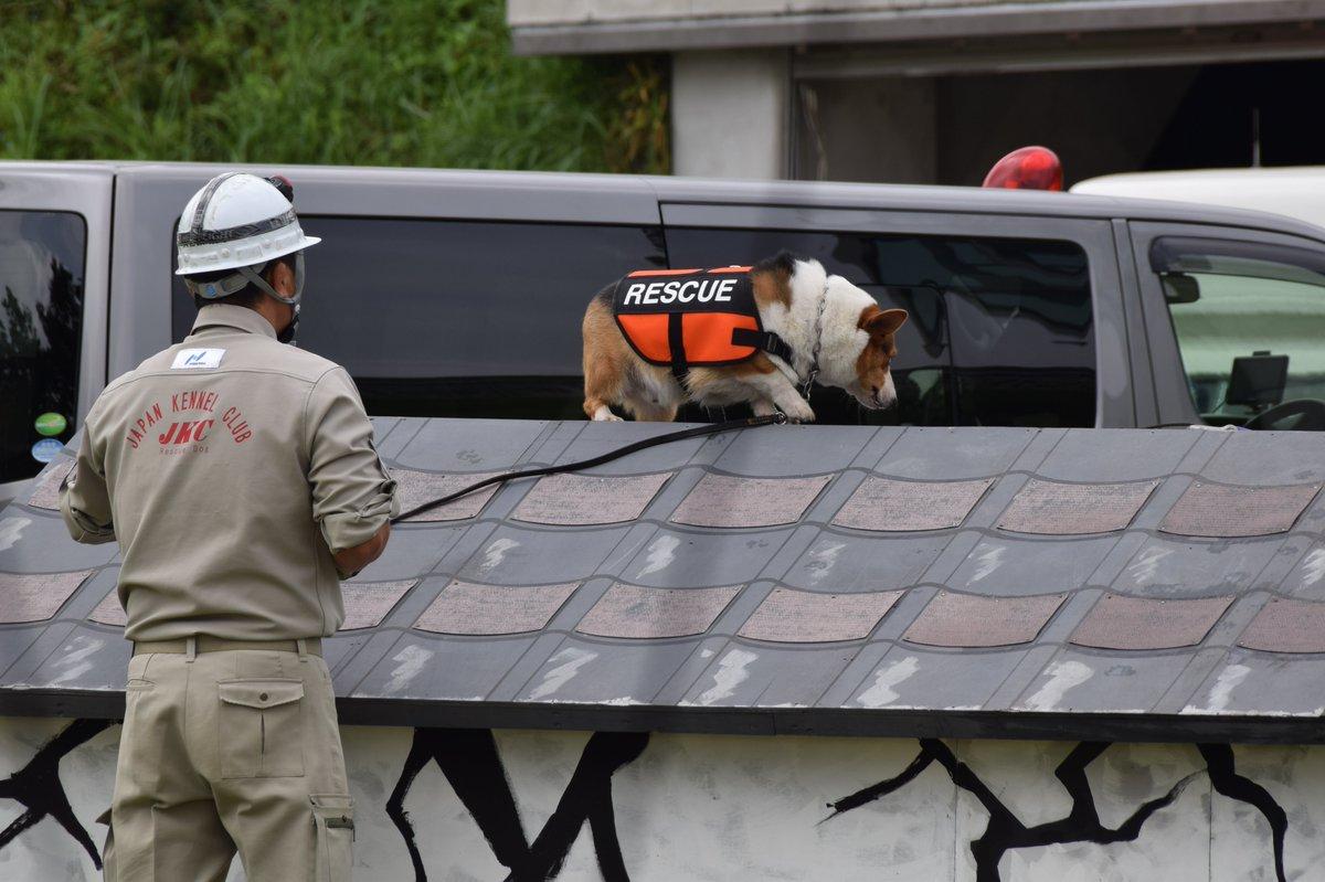 test ツイッターメディア - 城址公園にて開催された防災訓練にて ほとんど写真を撮っていません\( 'ω')/誰かー!!! 災害救助犬のコーギーちゃんに釘付け( *´艸`)模擬家屋ではワンワン吠えて要救助者発見! 訓練終了申告と閉会式にも参加。 あくびー!! カワ(・∀・)イイ!! https://t.co/NHUQUsQ1FI