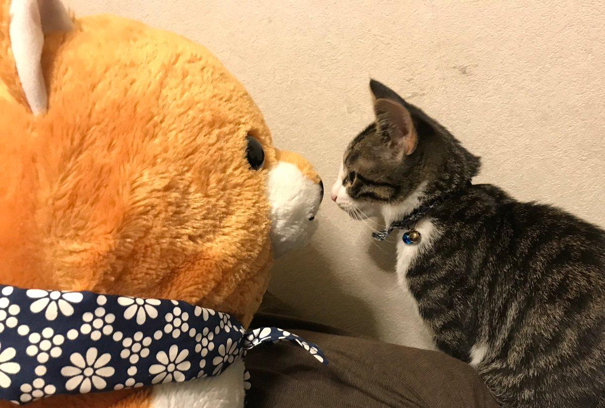 猫と犬? #ハヤテ #HAYATE