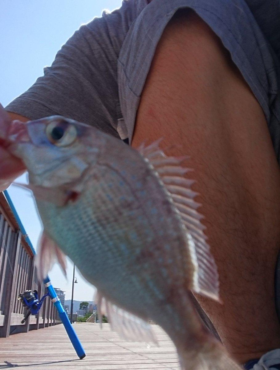 「うどんの国の金色毛鞠」の聖地巡礼ということで作中で中村悠一と杉田が釣りをしていたサンポート高松で釣りをしてきました。鯛