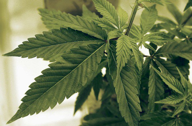 State seeks bids for real-time access to medical marijuana facility cameras