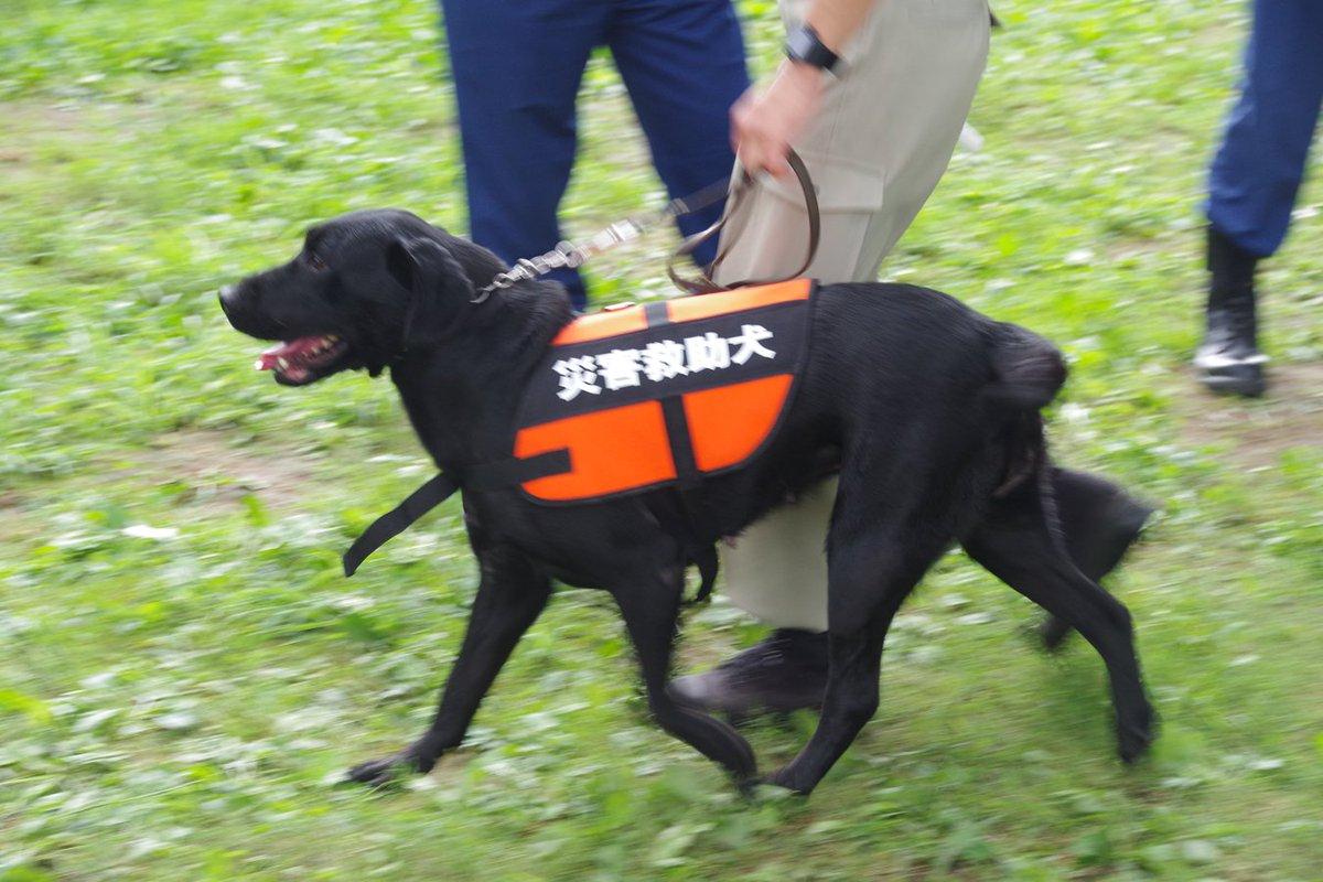 test ツイッターメディア - 宇都宮市総合防災訓練に登場した災害救助犬。小型のコーギーと大型犬各1頭。 https://t.co/qLodwtR6cm