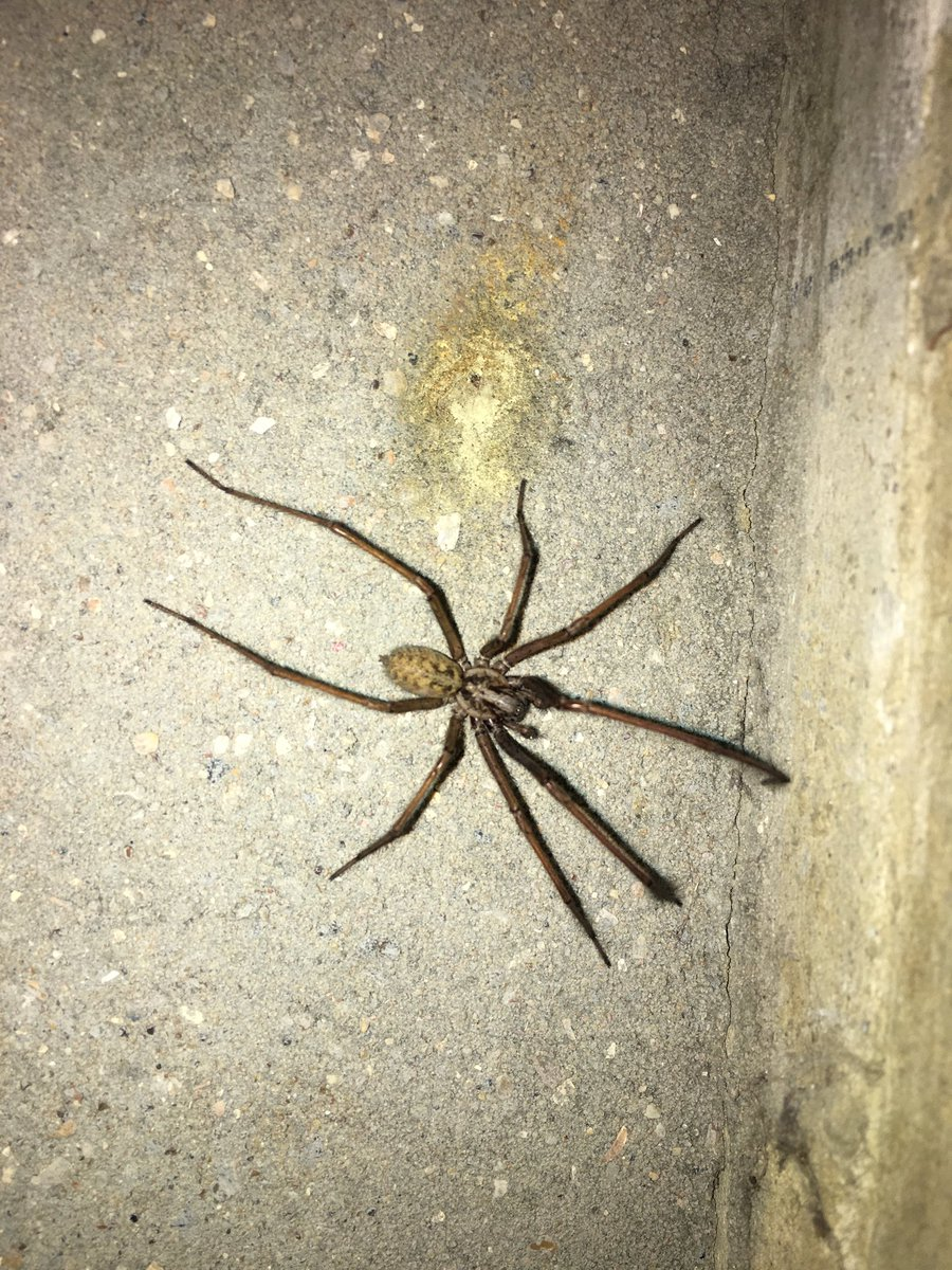 test Twitter Media - We have a big spider in our entrance way. https://t.co/54Hv9p4Biq