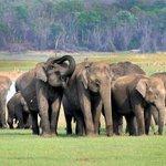 Tourist safaris disturb Kabini's wildlife, warn experts