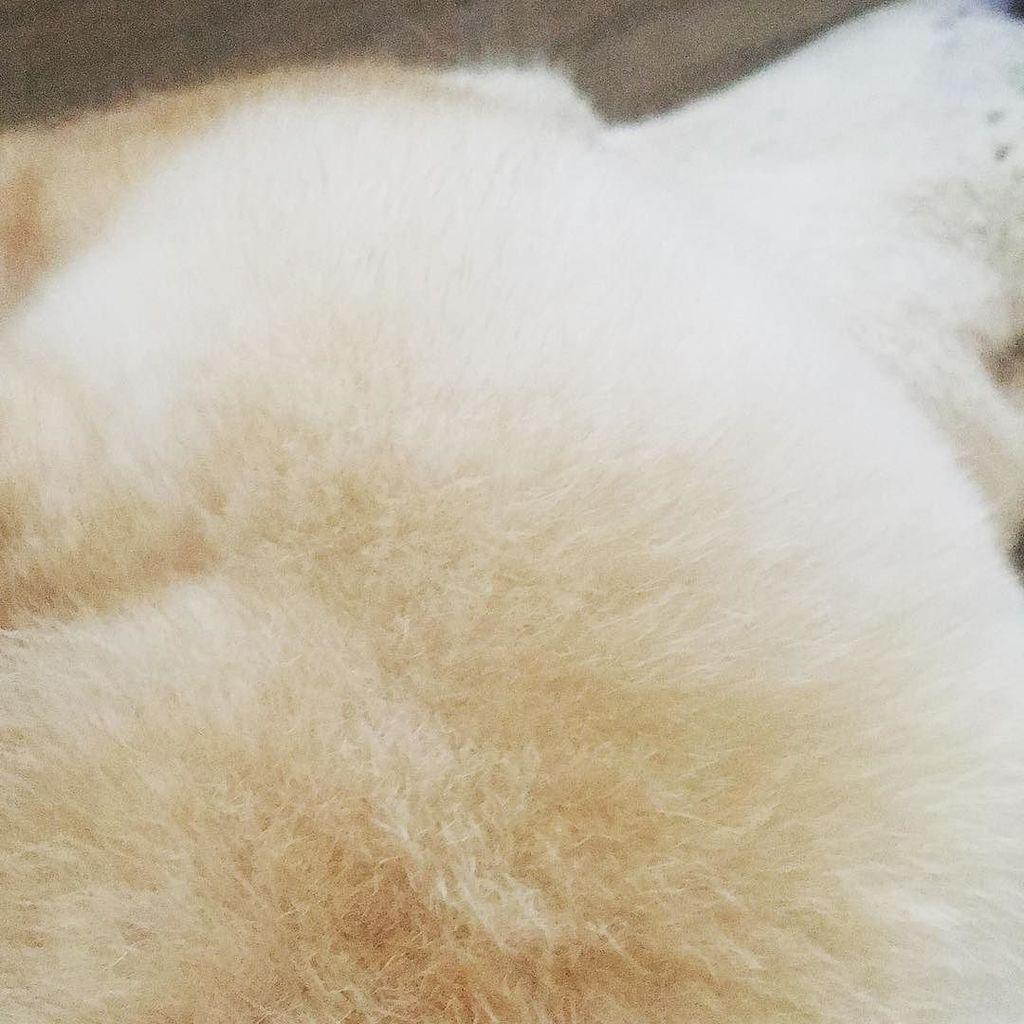 test ツイッターメディア - まふっ #さてどこでしょう  #自慢の #ほっぺ #柴犬らっくん #柴犬 #shiba #shibainu #shibadog #dog #instadog #shibastagram #instashiba https://t.co/j0VBEzn7IM https://t.co/NzgdcxPWbQ