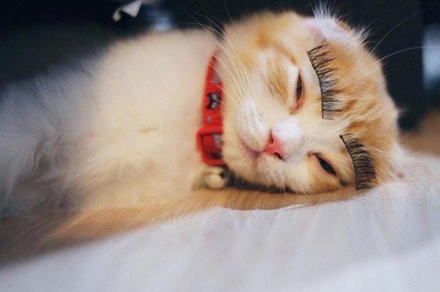 #ทาสแมว