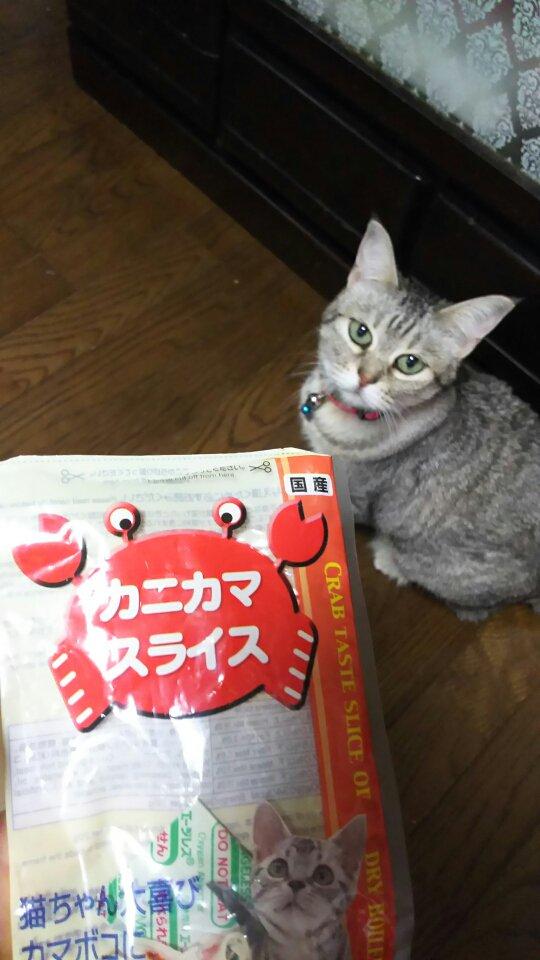 こんにちはーԅ(*´∀`*ԅ)モミモミ低血圧だけど頑張って起きたフランチェスカです✩朝から猫が見当...