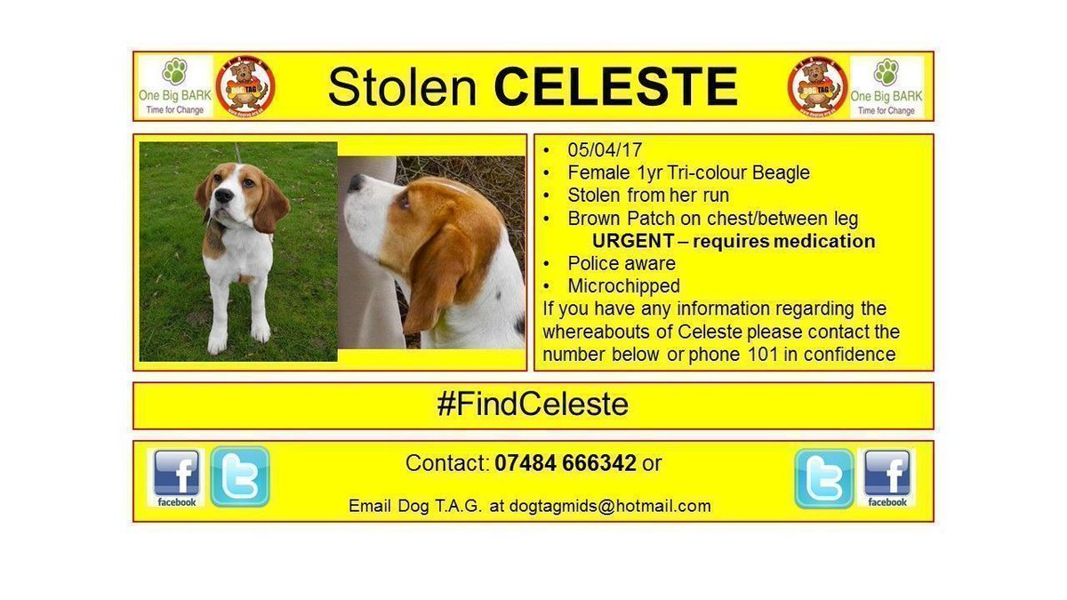 RT @DogTAGMids: #findcelesteWHERE ARE YOU CELESTE? missing #wilmington plse help find celeste #woofwoofwednesday https://t.co/pWqM2nkQh6
