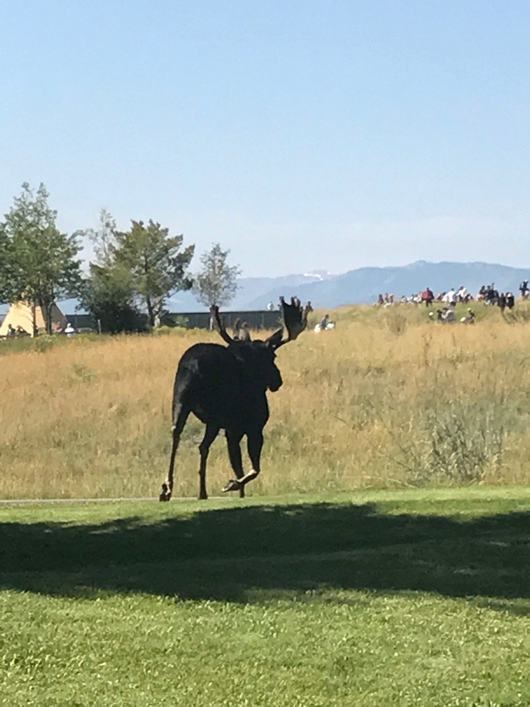 test Twitter Media - Our pre-eclipse visitor! #SolarEclipse2017 #JacksonHole https://t.co/f9ndaSBNWY