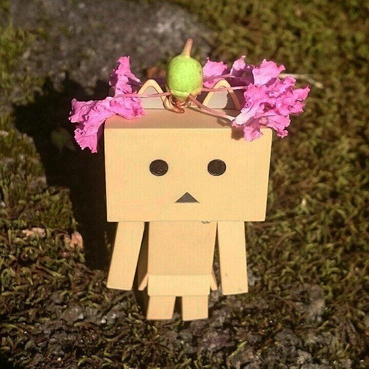 この花、にゃ~に?実(種)から花?が出てるにゃ#ダンボー#にゃんぼー#ニャンボー#ダボニャ#danbo