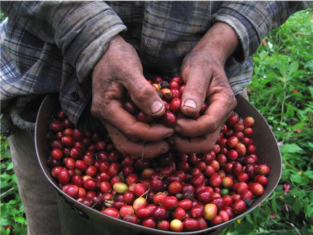 """""""De cada dólar que consumidores de EEUU pagan por una tasa de café en @Starbucks, solo el 3% va a parar al cultivador de café Colombiano""""🤔 https://t.co/3Qoc2eOlaI"""