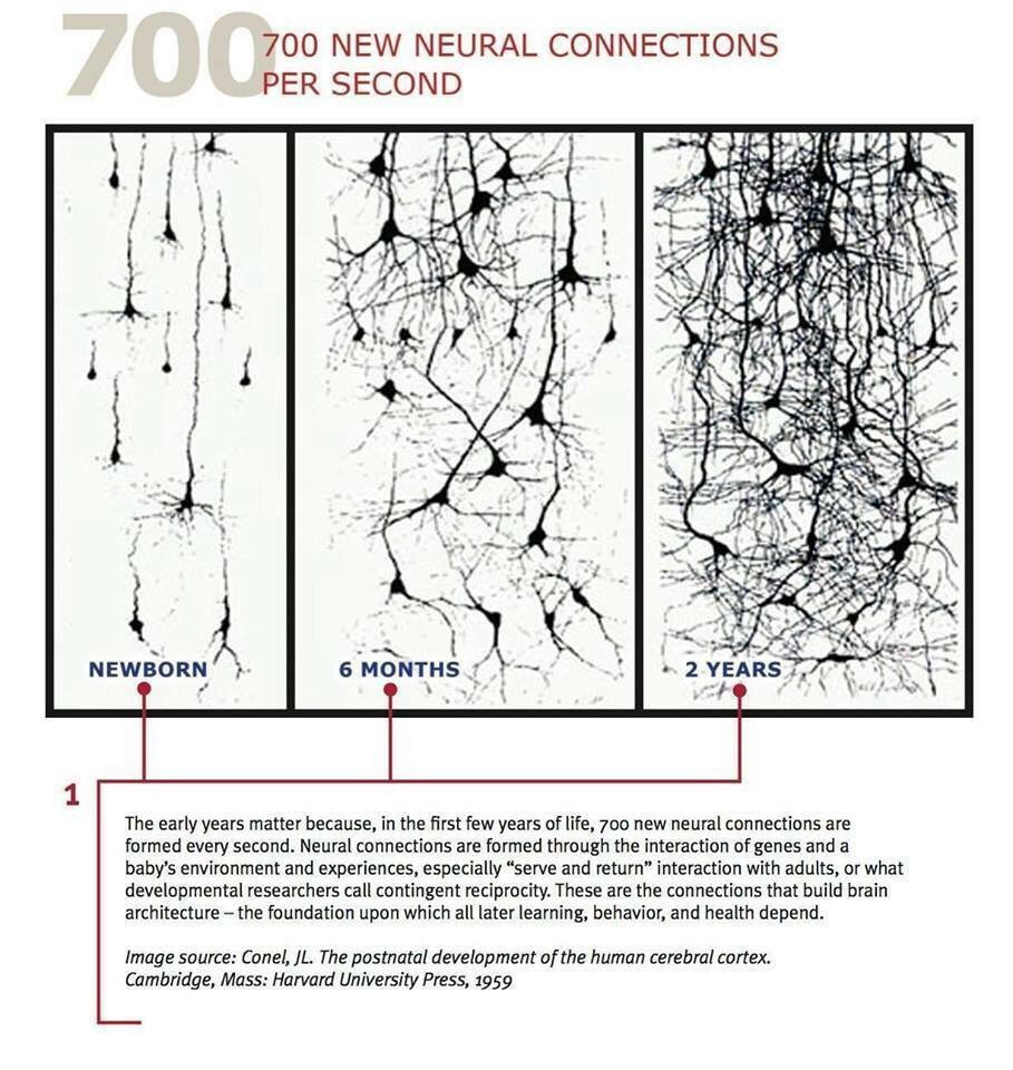Did you know...In the first few years of life, 700 new neural connections are formed every second. https://t.co/j4fZb1asZm